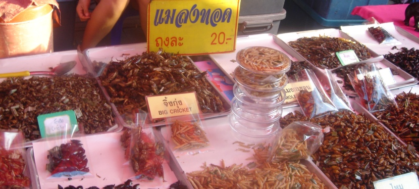 Thailand – Top Things To Do In ChiangMai